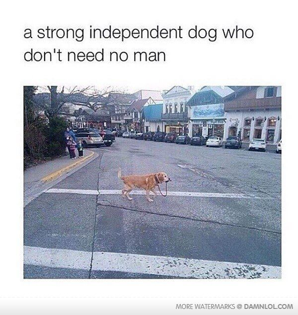 "dog crossing road with lead in his mouth with text overlay ""a strong independent dog who don't need no man"""