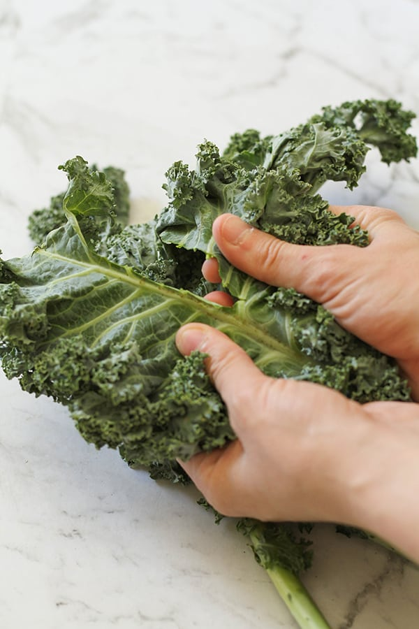 hands pulling kale leaves away from the stem.